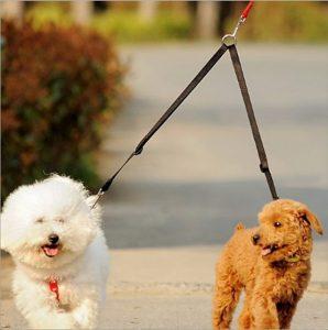ασφαλεια σκυλων