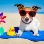 Πώς θα φροντίσετε το σκύλο σας το καλοκαίρι
