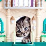 Τα πάντα για την ασφάλεια της γάτας