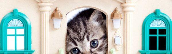 γατα στο σπιτι
