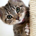 Τι χρειάζεστε για να φροντίσετε σωστά τη γάτα σας