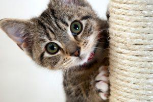 παιχνιδια γατας