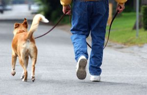 σκυλος βολτα