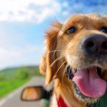 Οι ανάγκες του σκύλου