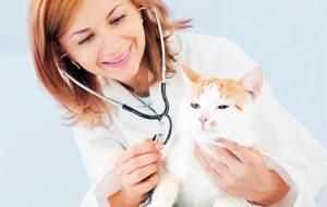 Κτηνιατρος για γατες συμβουλες για περιποιηση γατας
