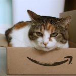 Μετακόμιση ή ανακαίνιση: πώς θα βοηθήσετε τη γάτα σας να νιώσει άνετα ξανά