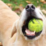4 παιχνίδια σκύλων που ο τετράποδος φίλος σας θα λατρέψει