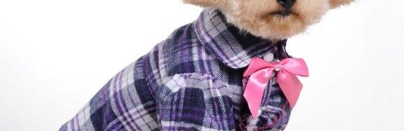ρούχα για σκύλους
