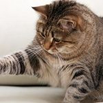 5 πρωτότυπα παιχνίδια για γάτες που μπορείτε να φτιάξετε μόνοι σας