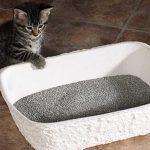 Η άμμος για γάτες. Χρήση και υγιεινή
