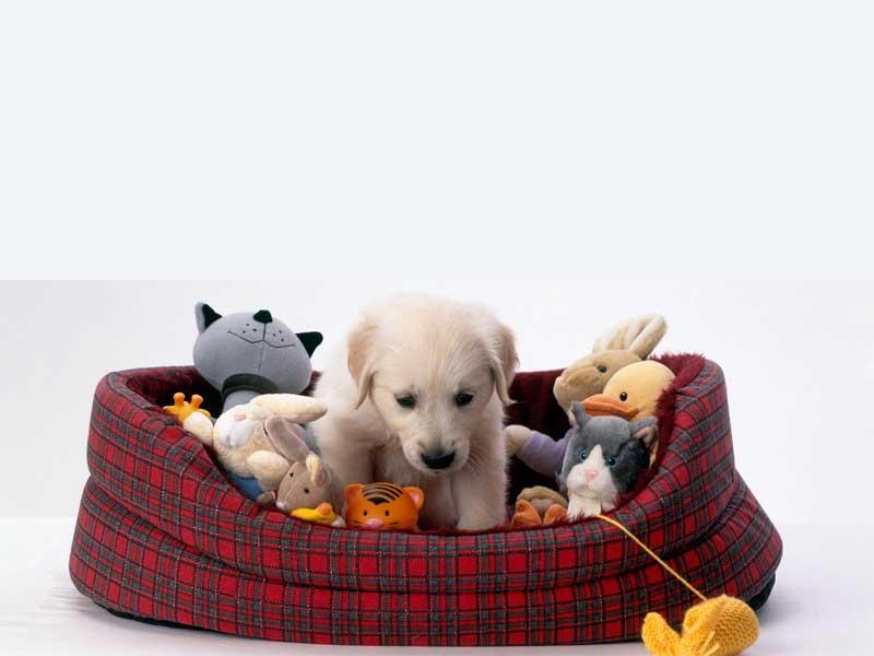 παιχνιδια για σκυλους