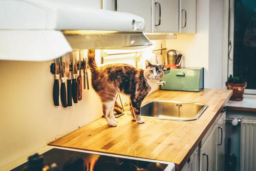 γατα-κι-επιπλα-κουζινας