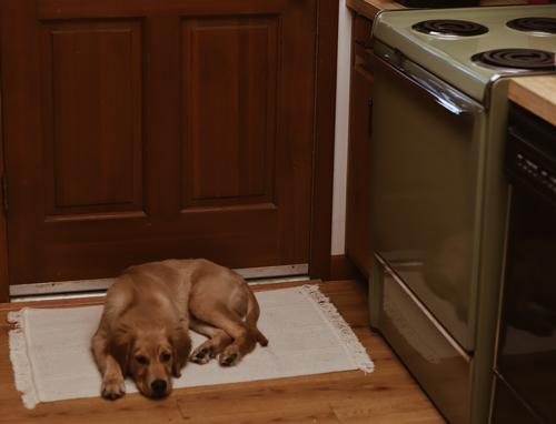επιπλα-κουζινας-και-σκυλος