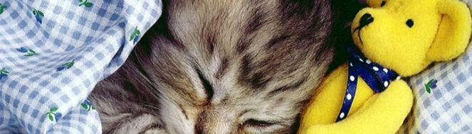 παιχνιδια για γατες