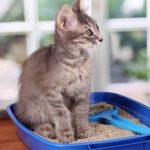 Πώς να κρατήσετε χωρίς μυρωδιές την άμμο της γάτας σας