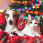 4 επιλογές σε χριστουγεννιάτικα φωτάκια για σπίτια με κατοικίδια ή παιδιά