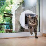 Πορτάκι κατοικιδίου πάνω στα κουφώματα αλουμινίου: Όσα πρέπει να προσέξετε