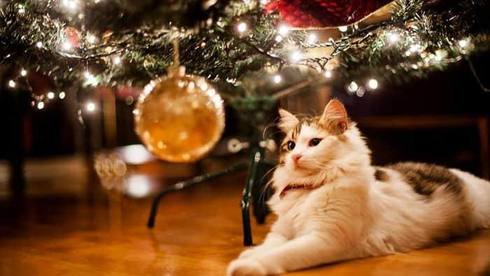 γατα μπροστα στο χριστουγεννιατικο δεντρο