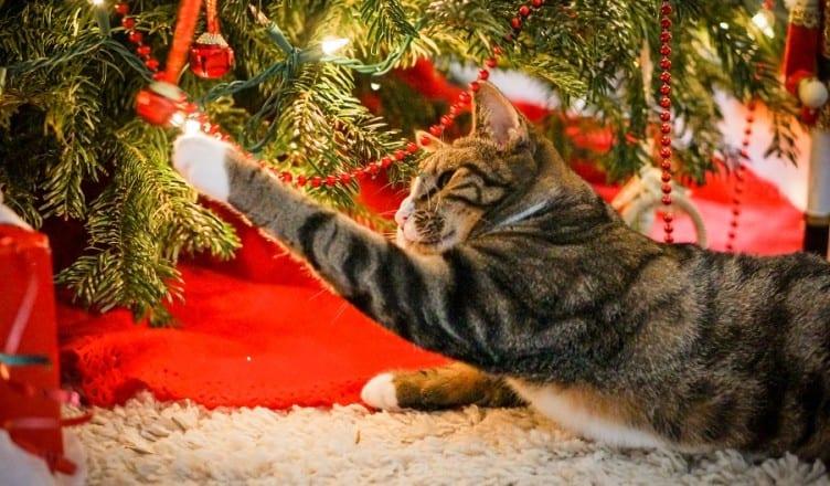 γατα και χριστουγεννιατικα λαμπακια