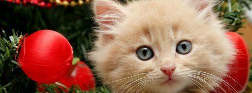 χριστουγεννιατικες γιρλαντες