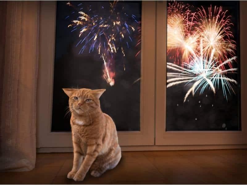 Γάτα δίπλα από μπαλκόνι με πυροτεχνήματα